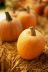 Pumpkins on Bale of Hay